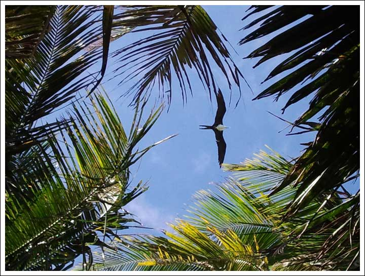Looking Straight Up from My Hammock on Ranguana