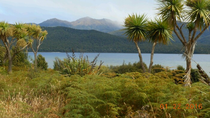 Lake Te Anua with palms-700x393