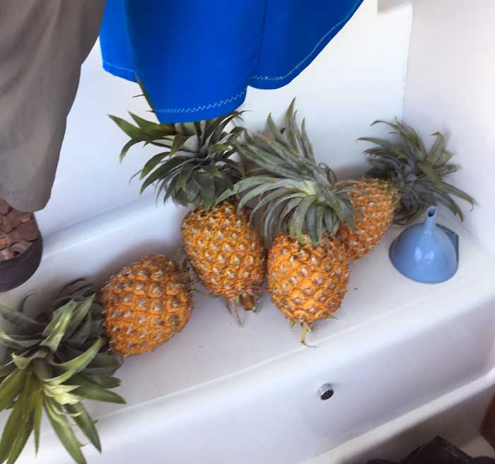 PineappleProvisioning